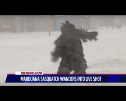 "Watch:  ""Pot Sasquatch"" Wanders into Live News Shot"